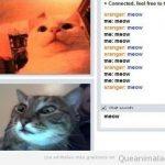 Cuando dos gatos se encuentran en chatroulette…