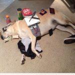 Cosas que puedes poner encima de tu perro mientras duerme