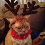 Gatos que prefieren estar muertos antes que disfrazados de reno