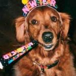 Perritos que te desean Feliz Año!