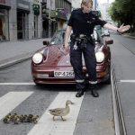 Por favor, dejen pasar a mamá pato