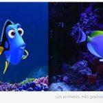 Nemo y Dory existen!