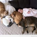Foto tierna del día: gatos y bebé