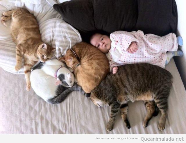 Imagen tierna y bonita de bebé asiático con gatos
