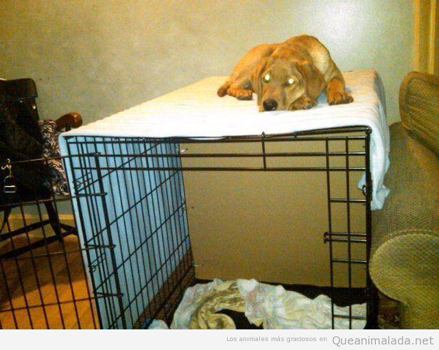 En la jaula va a dormir topota!