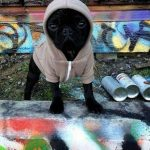 Este perro seguro que en el oeste de Philadelphia crecía y vivía...