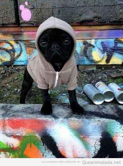 Este perro seguro que en el oeste de Philadelphia crecía y vivía…