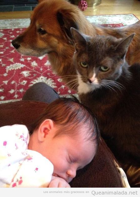 Los mejores babysitters que puedes encontrar!