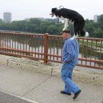 Salir a pasear con tu perro… estilo propio