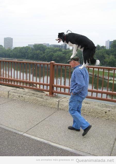 Foto divertida de un perro y un dueño paseando