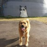 El Big Grumpy Cat te vigila