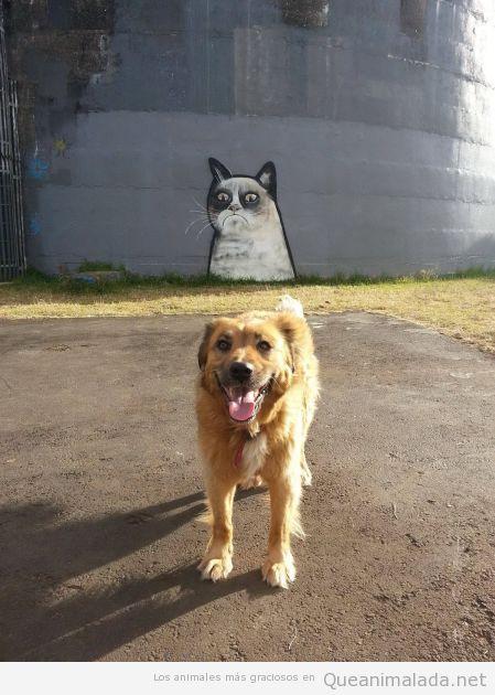 Foto graciosa de un perro con un graffity del grumpy cat detrás
