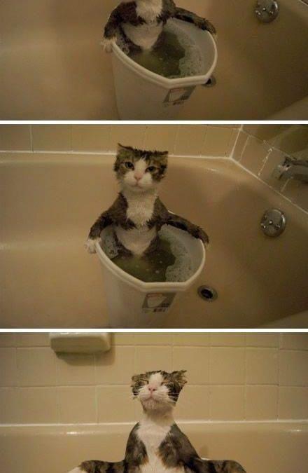 Gatos para los que un cubo es un jacuzzy