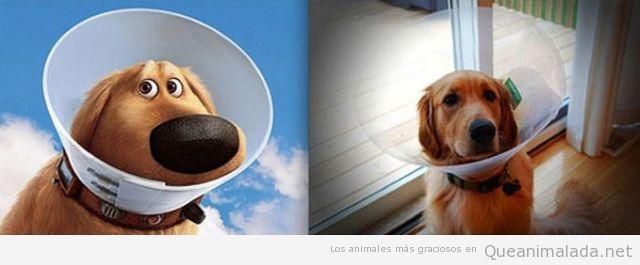El perro de a peli Up existe!