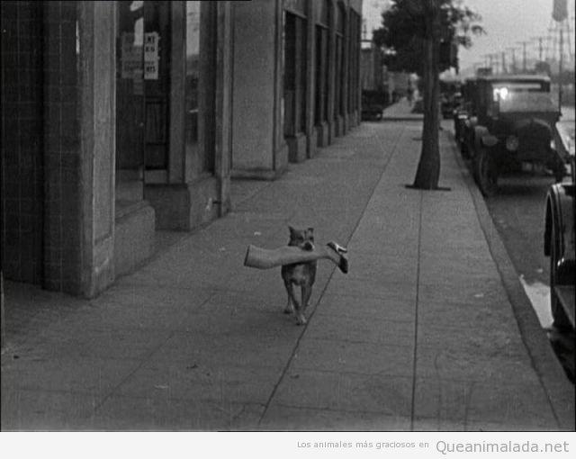 Foto graciosa de un perro con pierna maniquí boca
