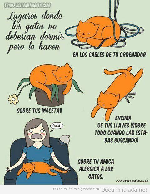Comic gracioso gatos