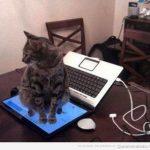 Tu gato y su amor profundo por tu ordenador…