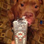 Quién se ha comido el mando a distancia?