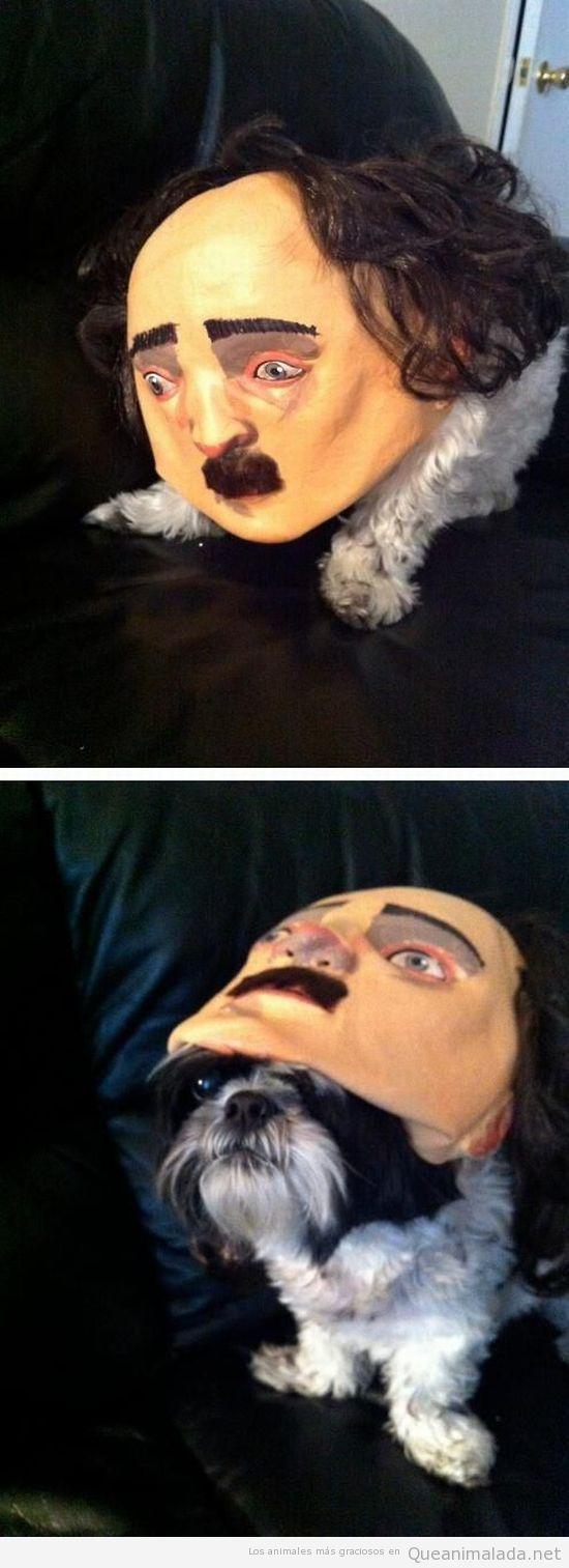 Foto gaciosa perro con máscara
