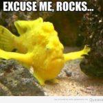 Dejen pasar al pez amarillo!