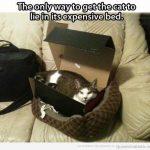 Solo hay una forma de que tu gato duerma en la cama super cara que le has comprado