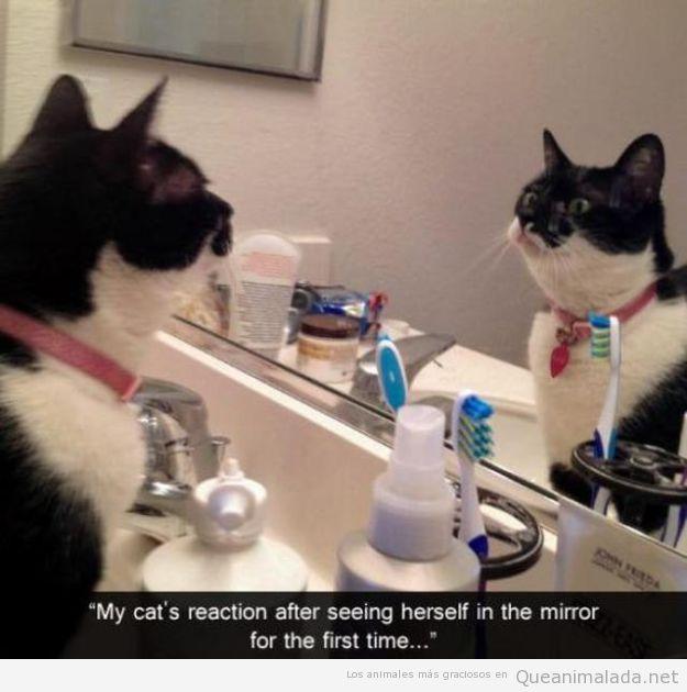 La reacción de un gato al mirarse por primera vez en un espejo