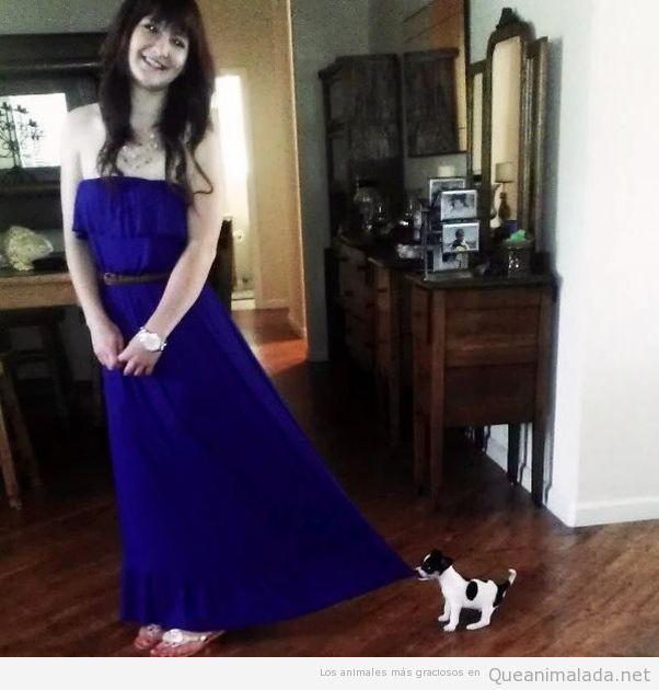 Cachorrito vs vestido de graduación
