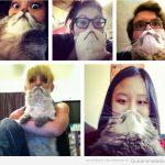 Cómo se divierten las personas con sus gatos…