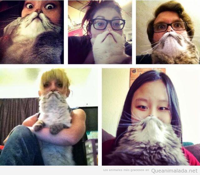 Fotos graciosas, mitad cara persona, mitad gato