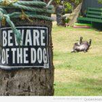 Cuidado con el perro! Si, ya, claro…