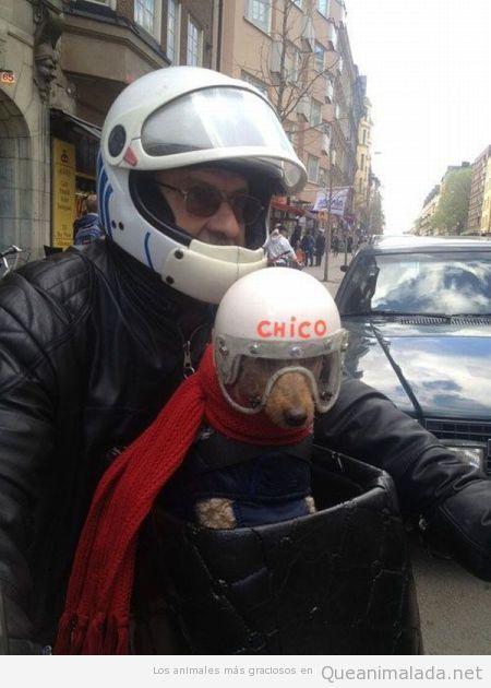 Snoopy existe en la vida real y también va en moto!