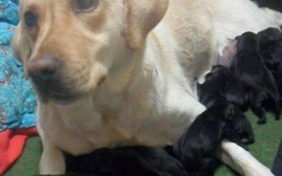 Te lo juro que los cachorros son tuyos, cariño…