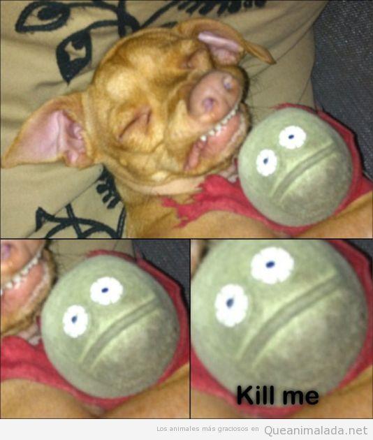 Foto graciosa de un perro durmiendo con un peluche