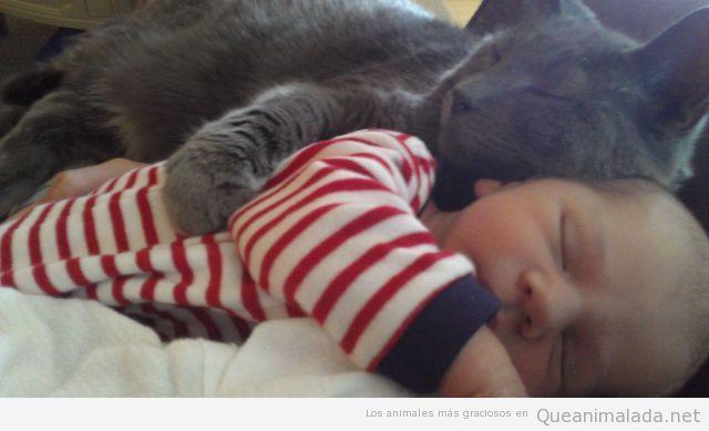 Imagen bonita y tienra de un gato y un bebé durmiendo juntos