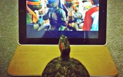 Tortuga viendo Las Tortugas Ninja