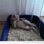 Algunos gatos son así de chulos y punto pelota