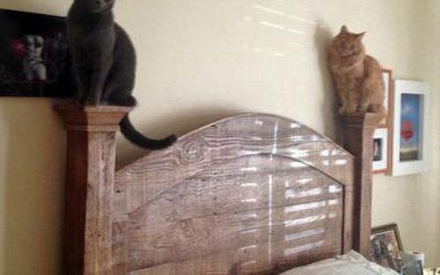 Gatos o gárgolas? Nunca lo sabremos