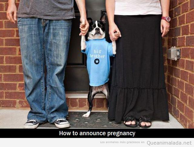 Perros que anuncian la llegada de un bebé a la familia