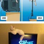 Los gatos y los televisores de pantalla plana... tremendos!