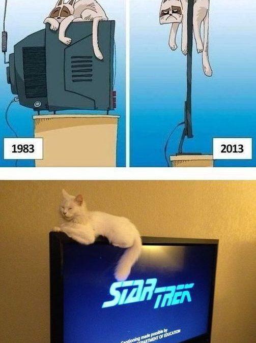 Los gatos y los televisores de pantalla plana… tremendos!