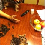 Lo mejor de cortarle el pelo a tu perro es este momento...