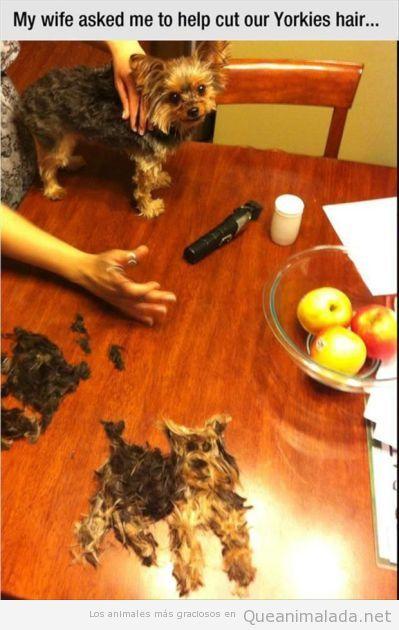 Lo mejor de cortarle el pelo a tu perro es este momento…