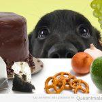 Y, cuando estás comiendo carne, la cabeza de tu perro aparece entre tus piernas