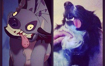 Espera, mi perro es una hiena de El Rey León y yo no me había enterao