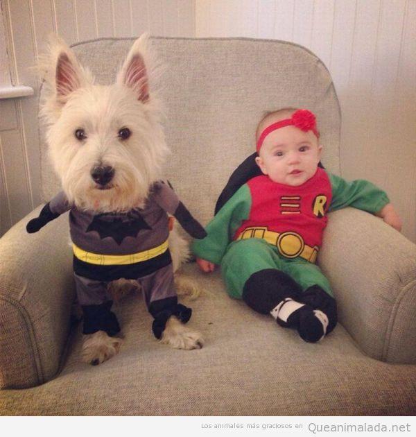 foto-graciosa-bebe-perro-batman-robin.jpg