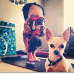 A esto se dedica tu chihuahua mientras haces yoga...