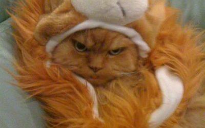 Qué poco le gusta a tu gato el Carnaval!
