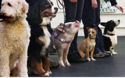 Espera… pero eso NO es un perro!