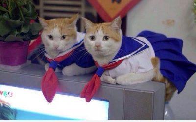 Dos gatas con disfraz de Sailor Moon ❤