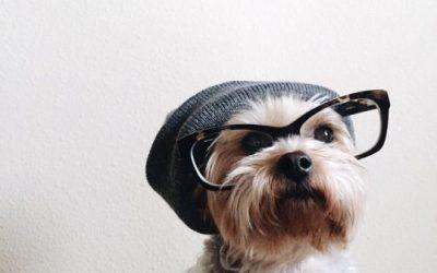 El perro más hipster que he visto nunca!